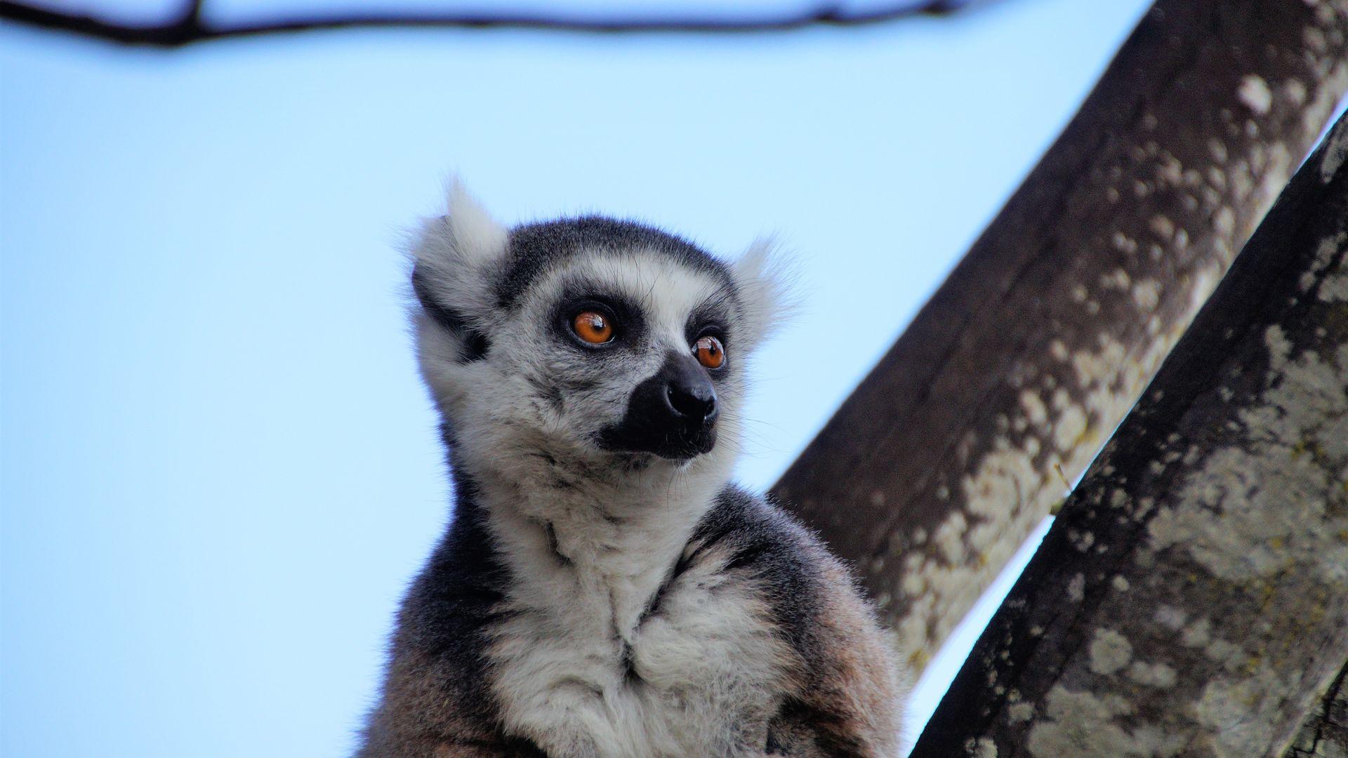 Visum Madagascar - Tips voor het aanvragen van een visum