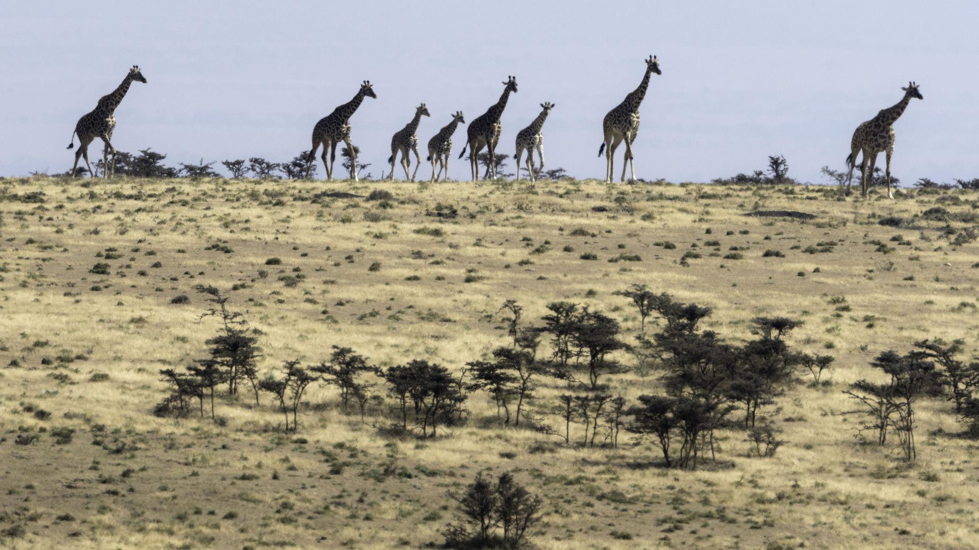 Serengeti vakantie - 10 dagen Serengeti reis | Matoke Tours