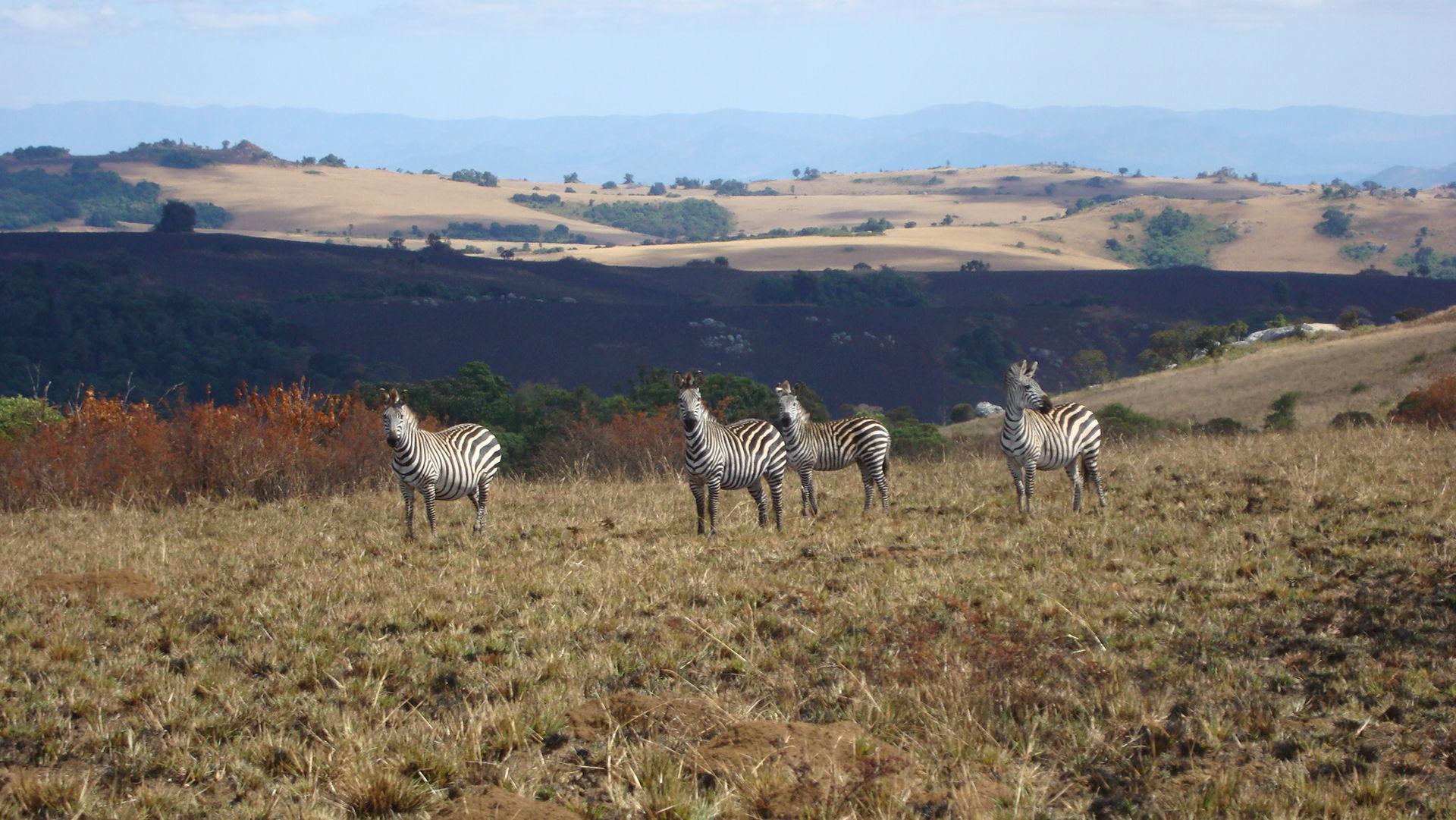 Nyika Plateau - hoogtepunten - Malawi
