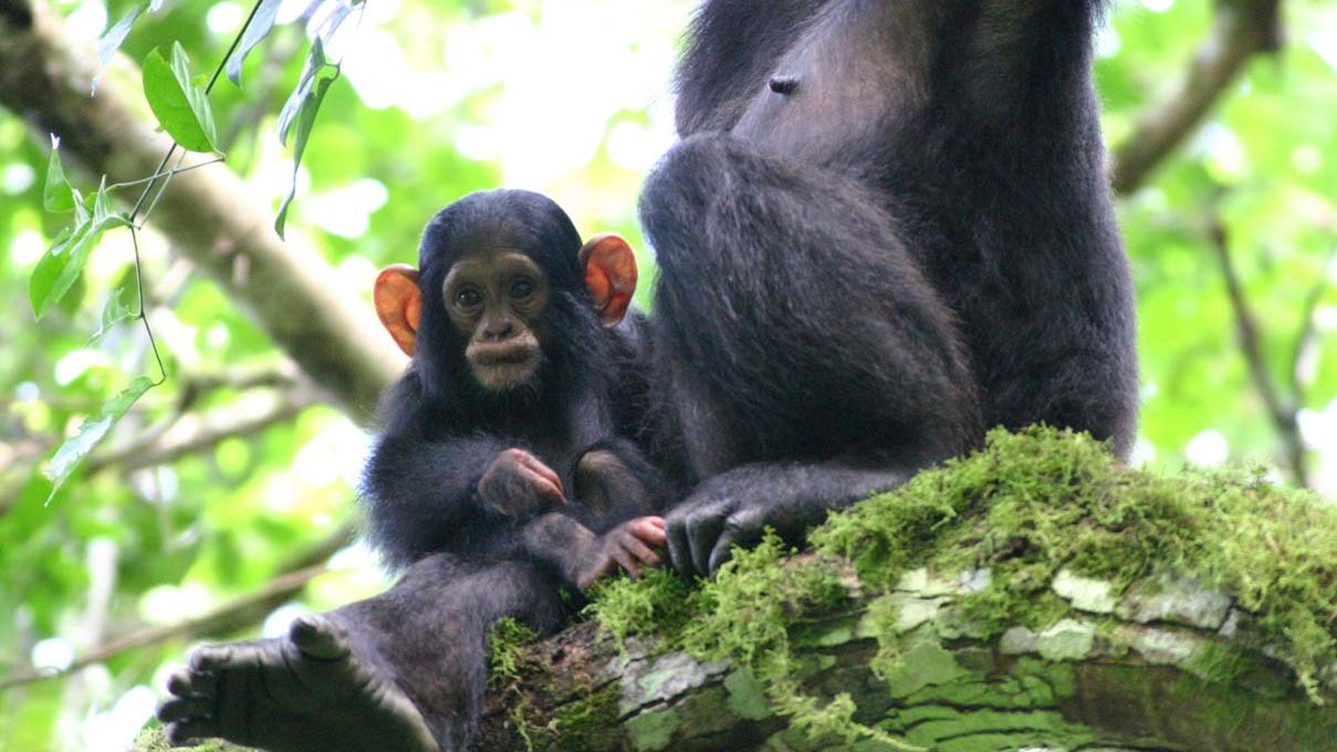 Nyungwe Forest Rwanda - Nyungwe Forest National Park
