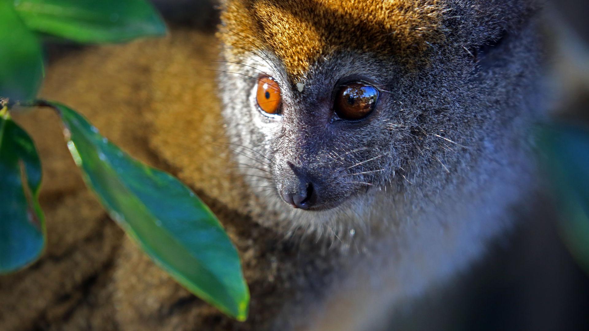 Ranomafana National Park - soorten lemuren Madagascar