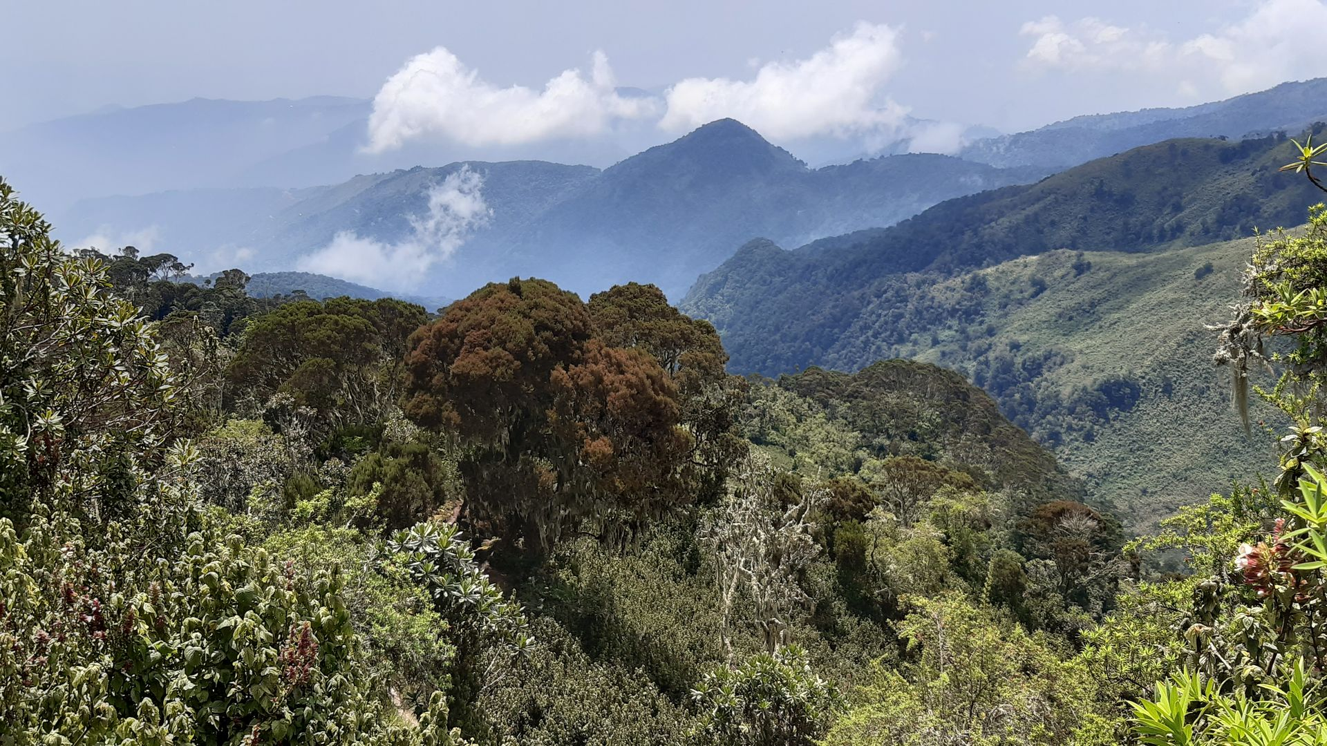 Reisverhaal rondreis Uganda