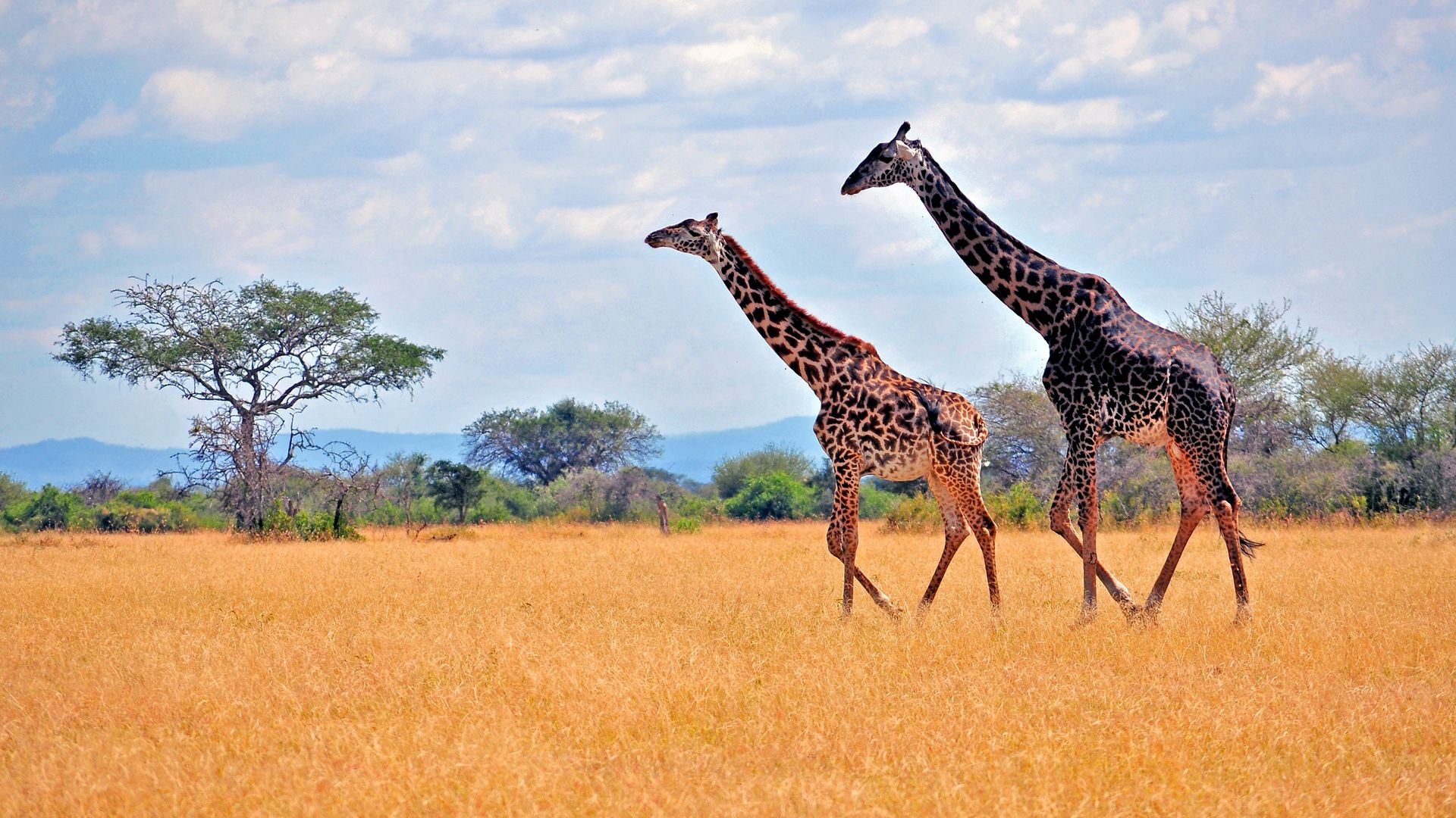 Reisverhalen Oeganda - Reisverhalen Tanzania