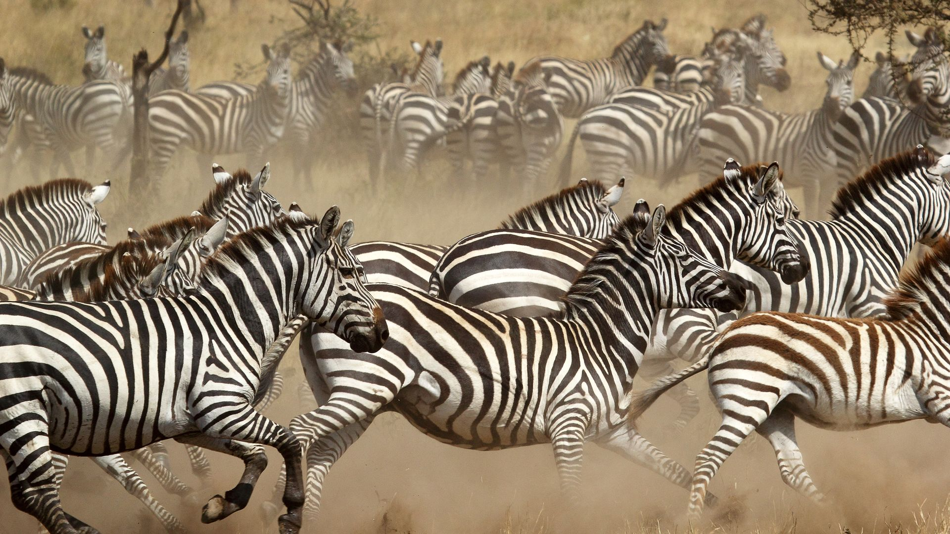 670c6bbe989823 Prive safari reis Noord-Tanzania   Zanzibar - 15 dagen