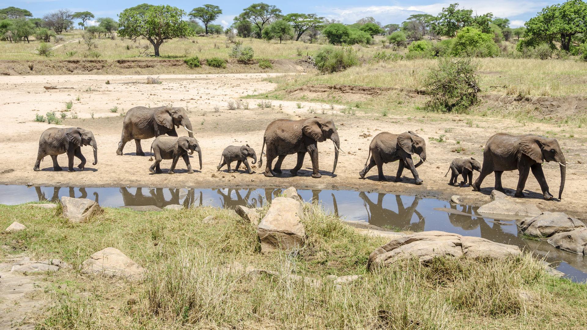 Bezienswaardigheden Tanzania - Hoogtepunten & nationale parken