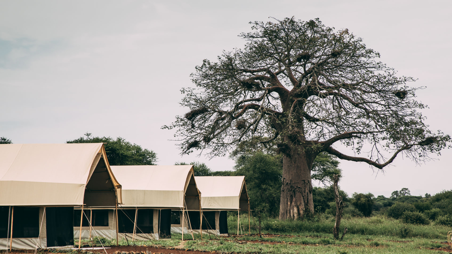 Tarangire Tortilis Camp » Matoke