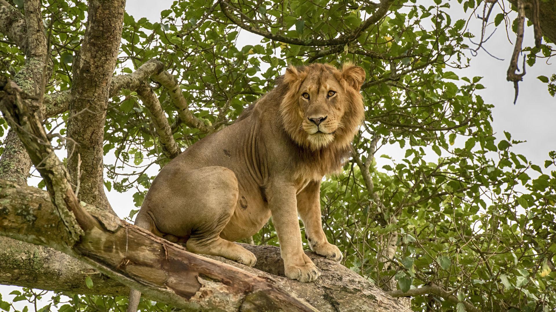 Uganda safari reis - Matoke Tours