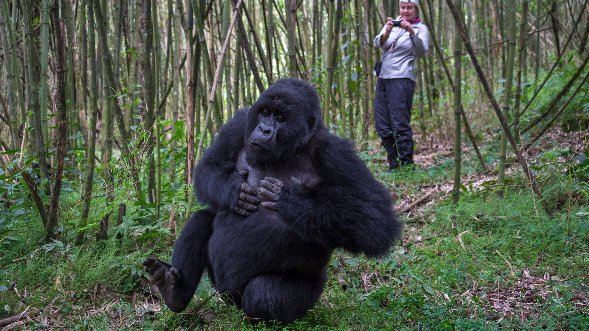 Uganda Rwanda - Matoke Tours