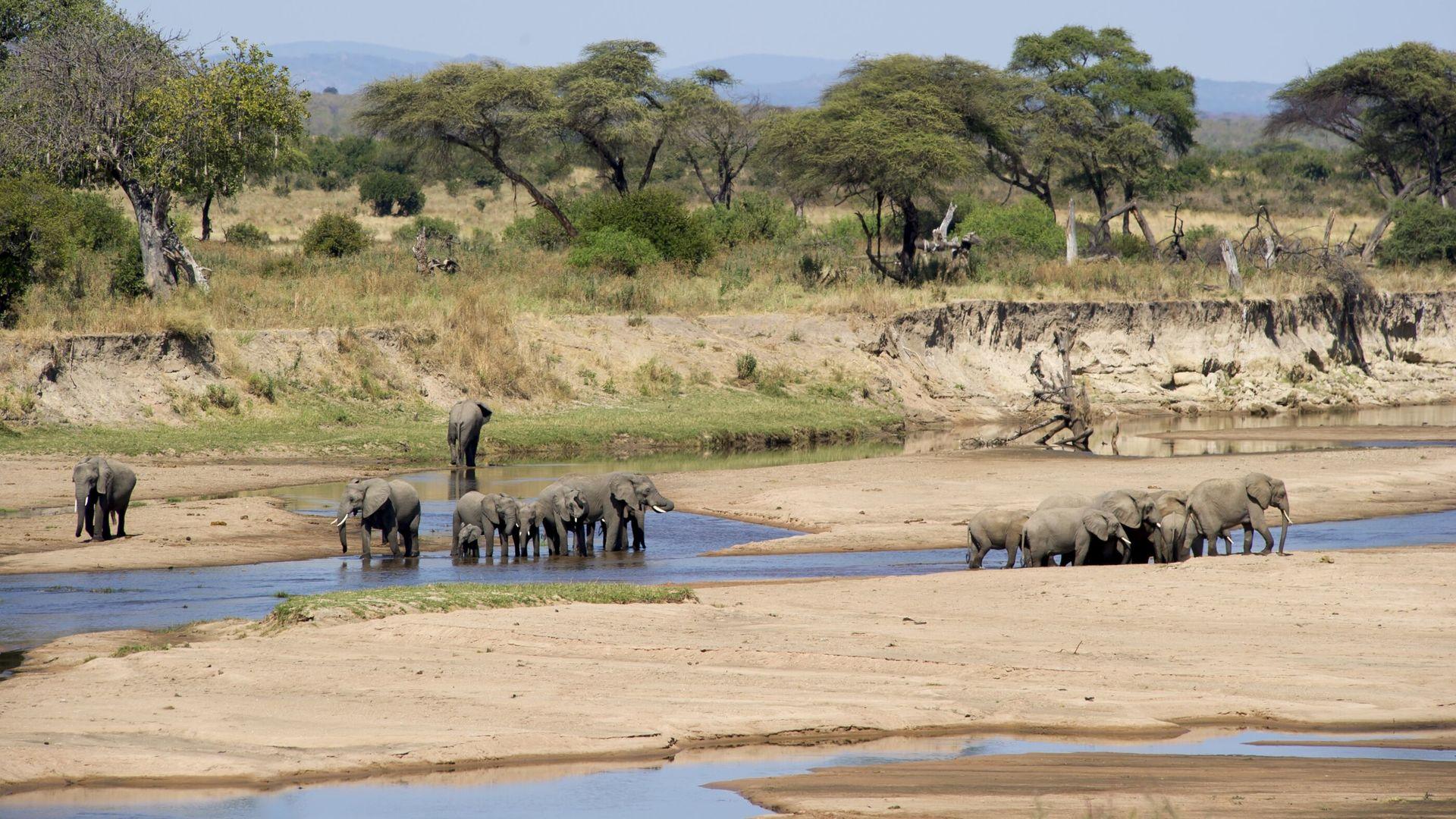 Nomad Sand Rivers Selous » Matoke