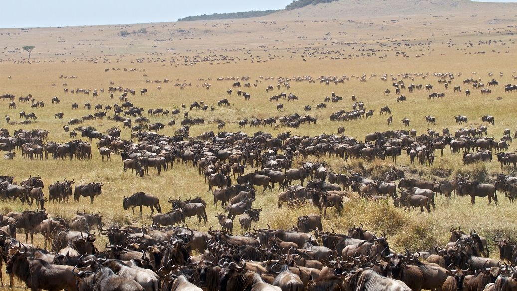 Privéreis Tanzania grote trek kalverseizoen- 9 dagen Matoke Tours