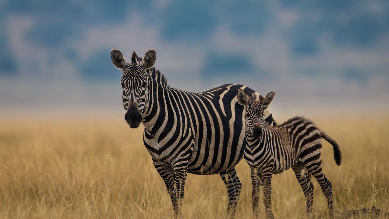 Oeganda primaten reis - rondreis door Oeganda met Matoke Tours
