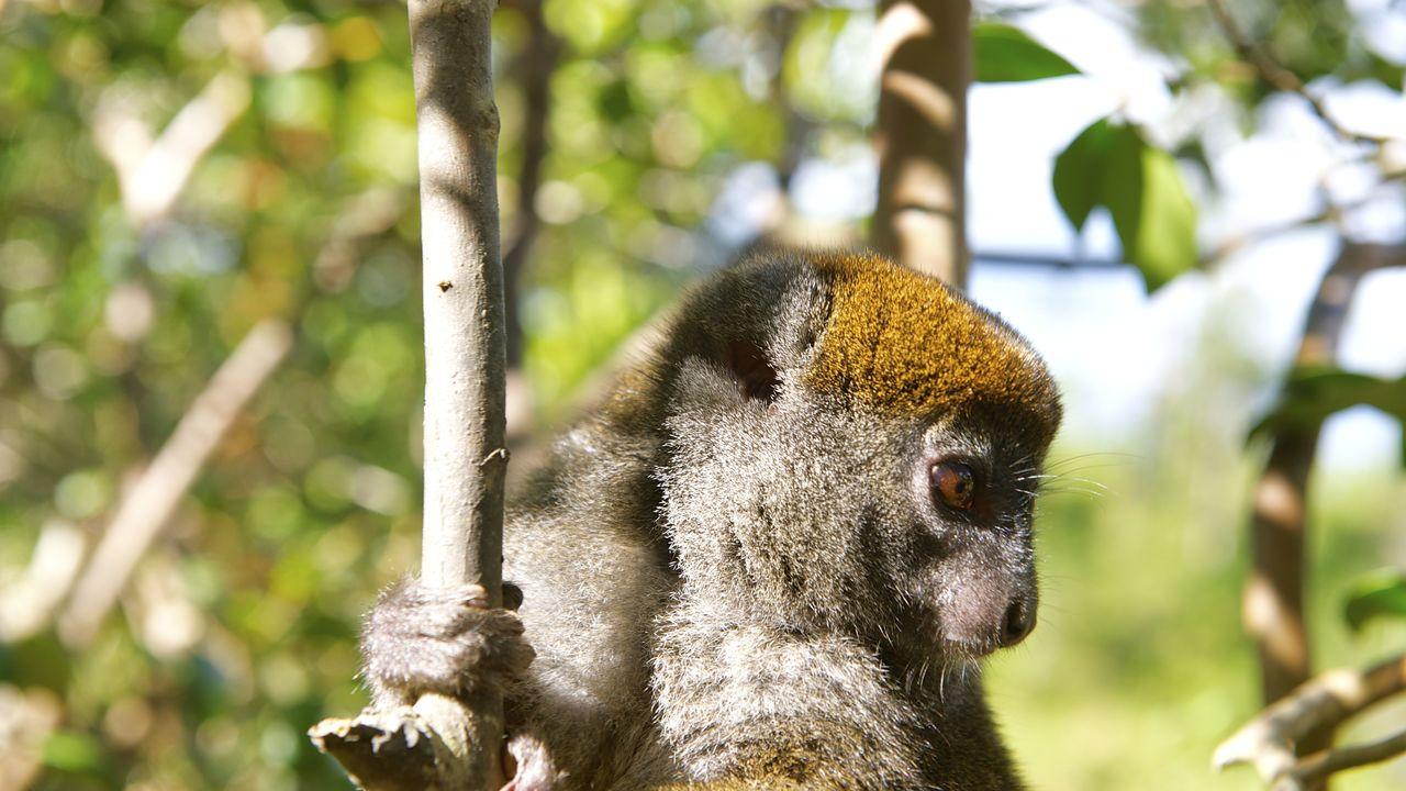 rondreis Madagascar - regenwoud Andasibe Mantadia National Park