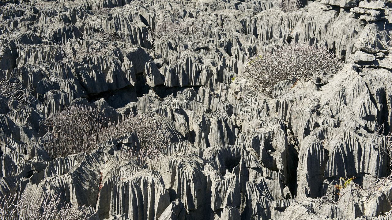 Madagascar compleet » Matoke