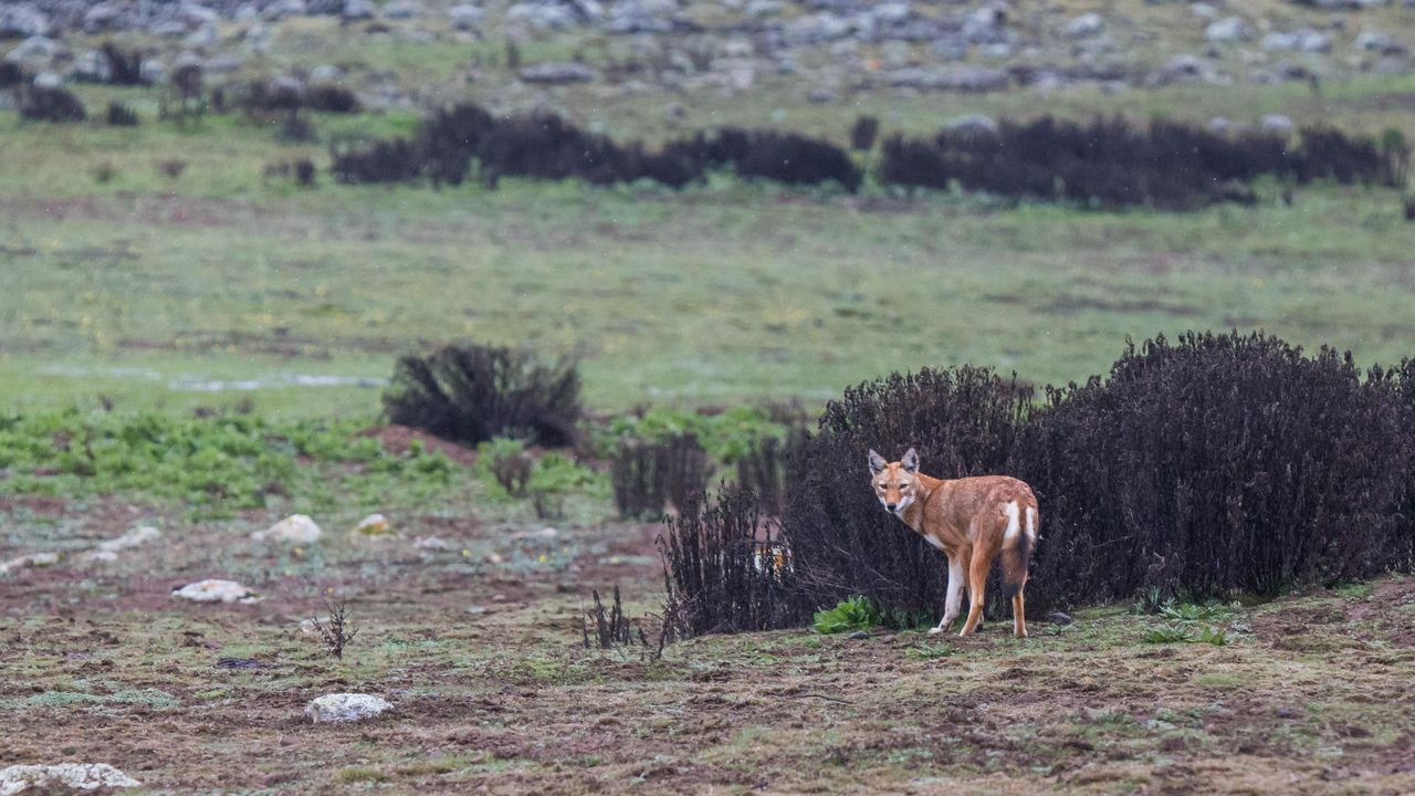 Bale Mountains | Matoke Tours