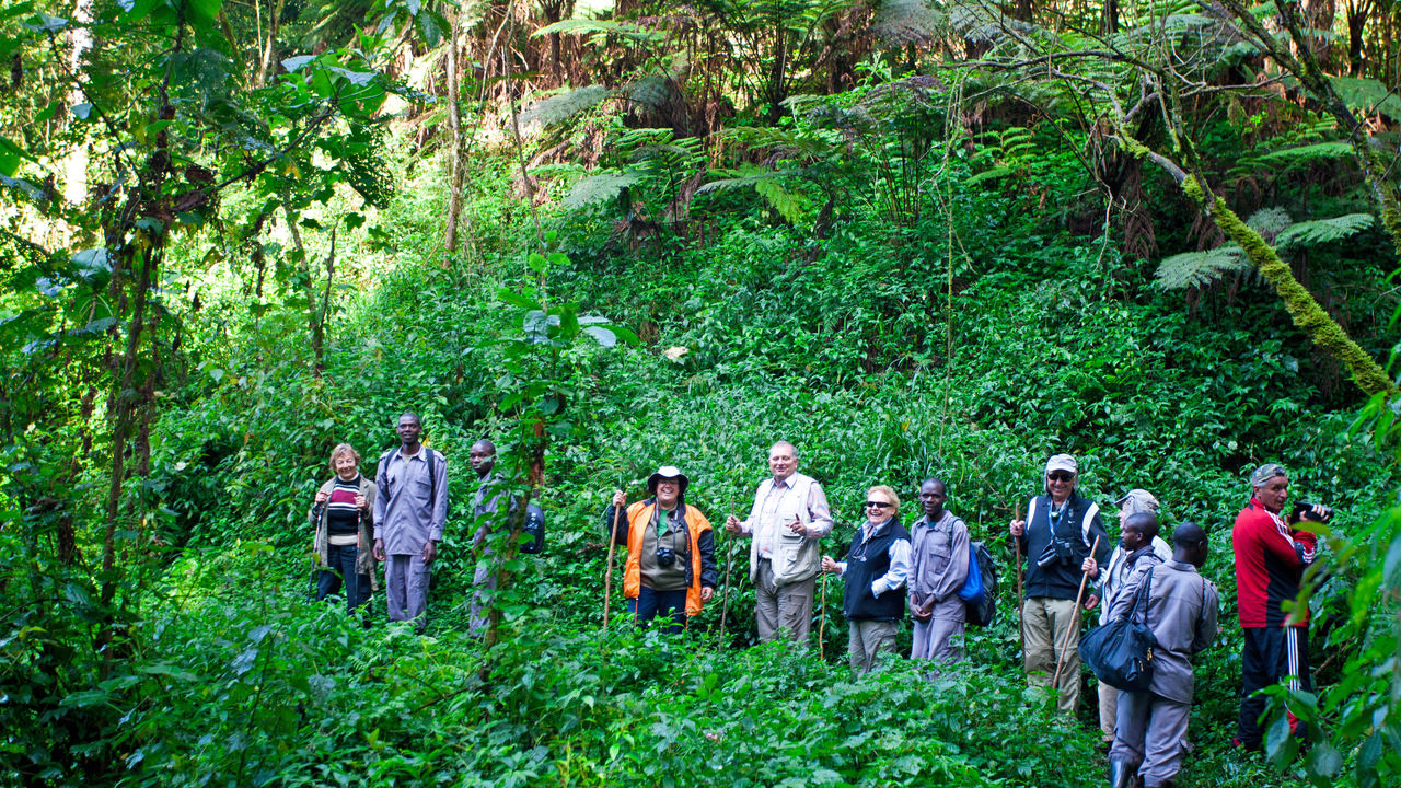 Bwindi Impenetrable Forest » Matoke