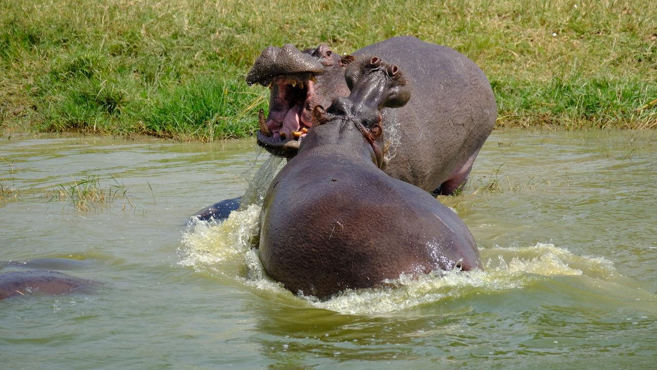 Uganda – Queen Elizabeth National Park