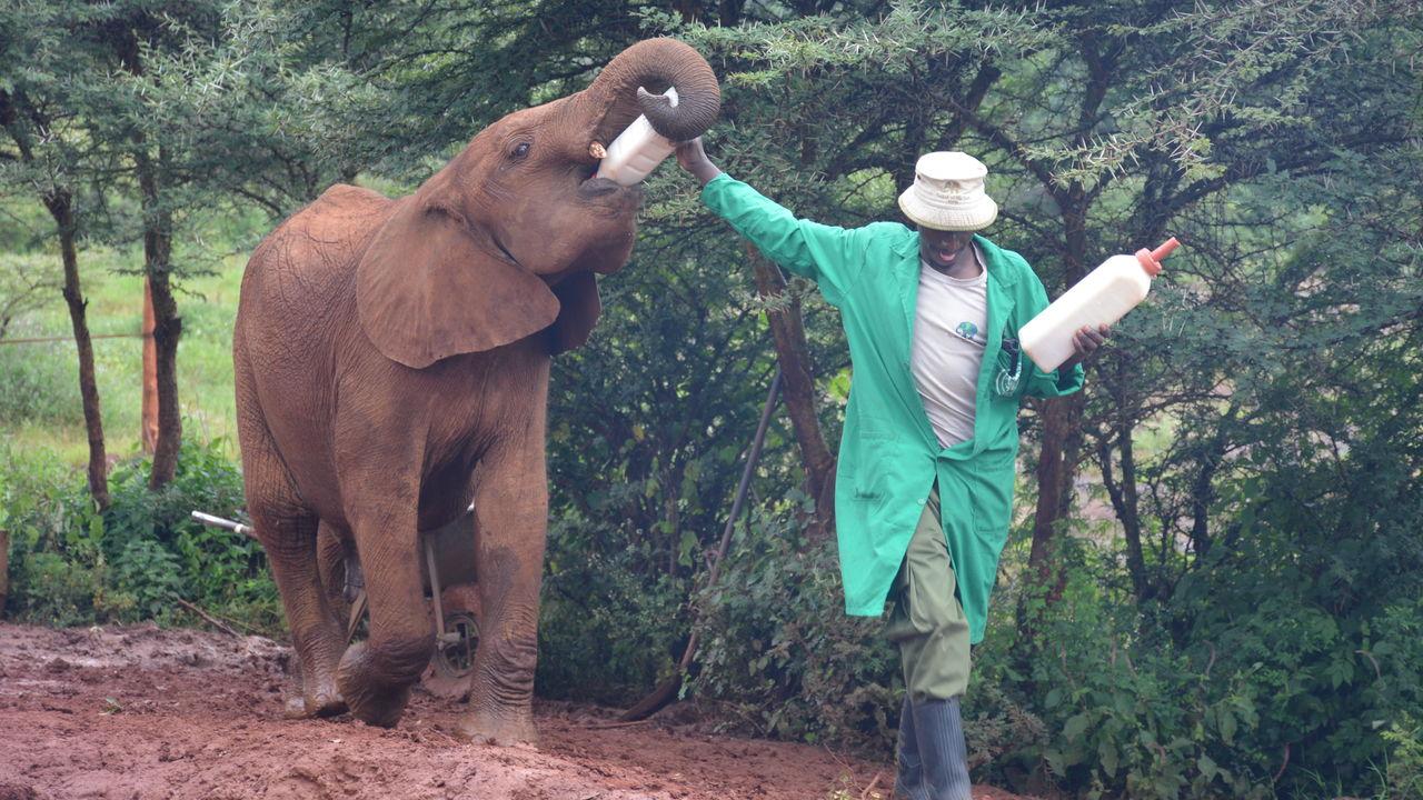 Verrassend Nairobi » Matoke