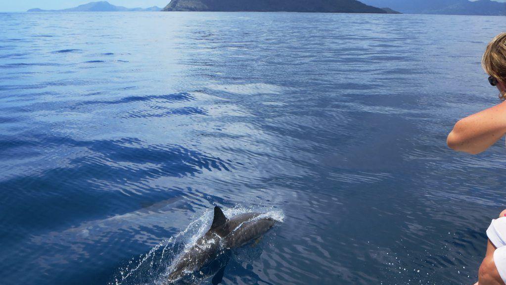dolfijnen comoren