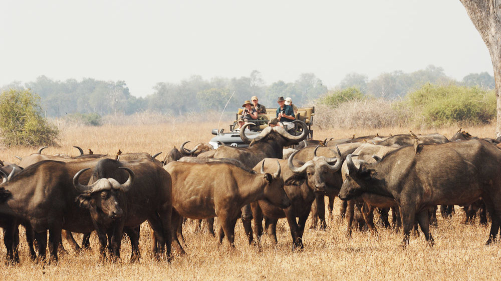 Vakantie Zambia - Safari Zambia reizen | Matoke Tours