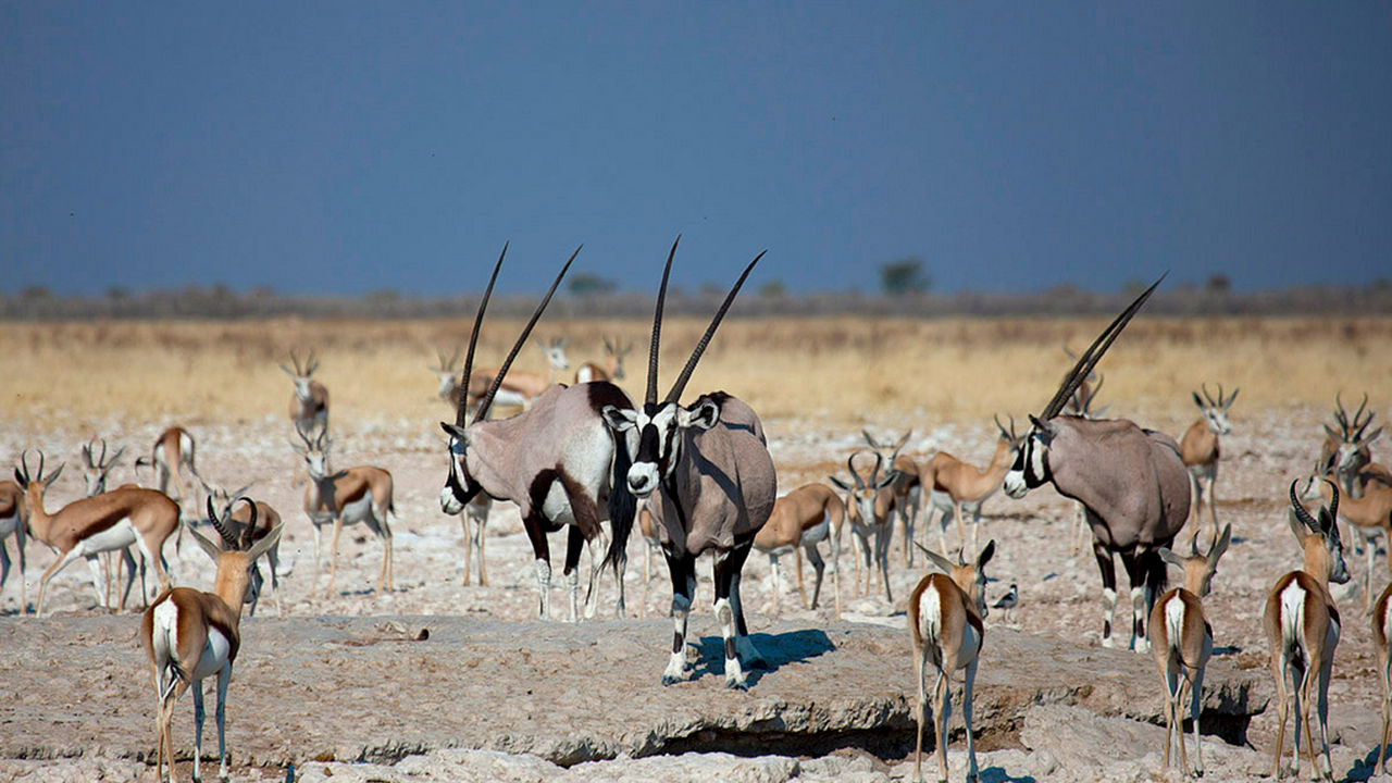Etosha Nationaal Park in Namibië - Matoke Tours - Etosha Pan