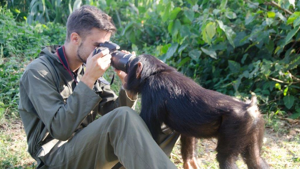 Chimpansees Oeganda - Entebbe Zoo - Uganda Wildlife Education Centre
