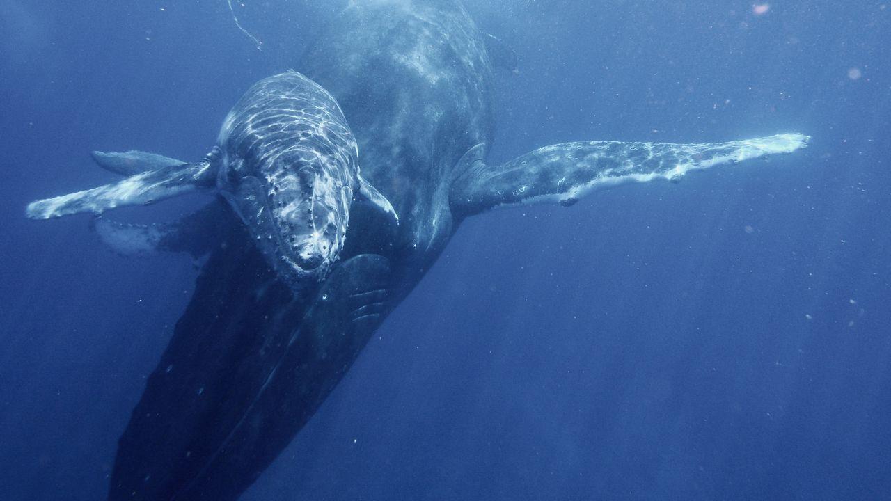 walvissen comoren