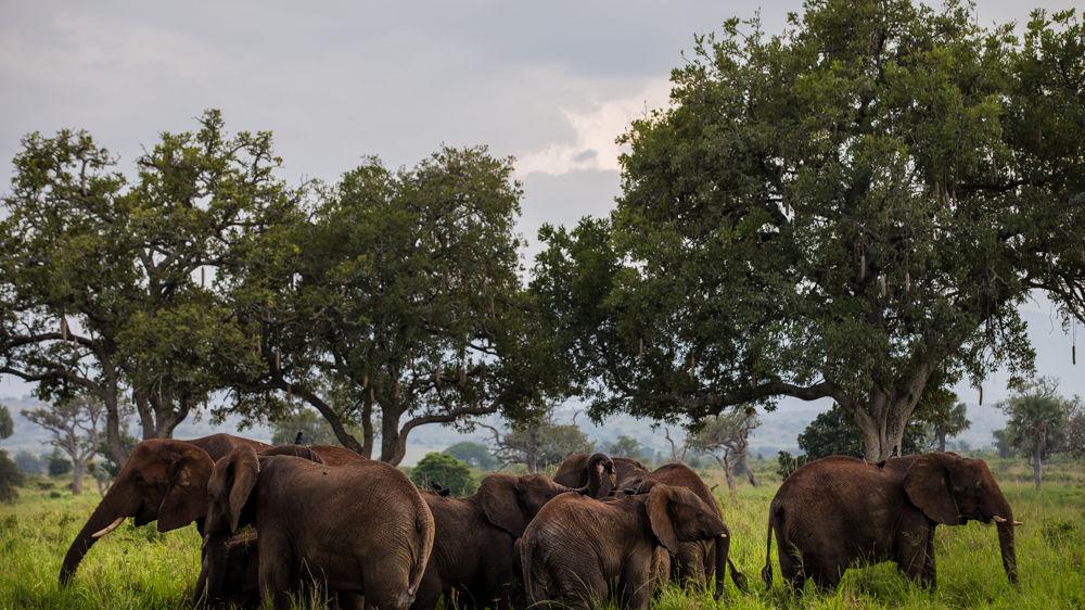 olifanten kidepo