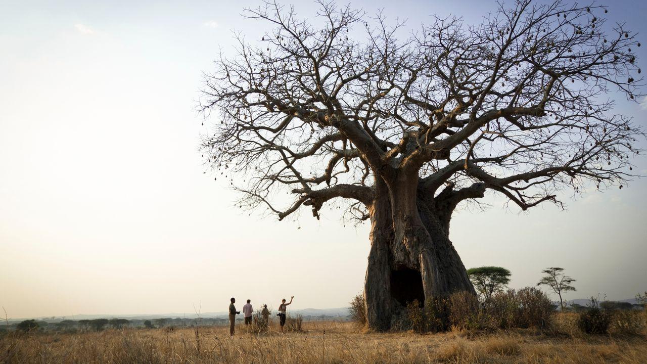 Ruaha - Ruaha National Park - Zuid Tanzania groepsreis
