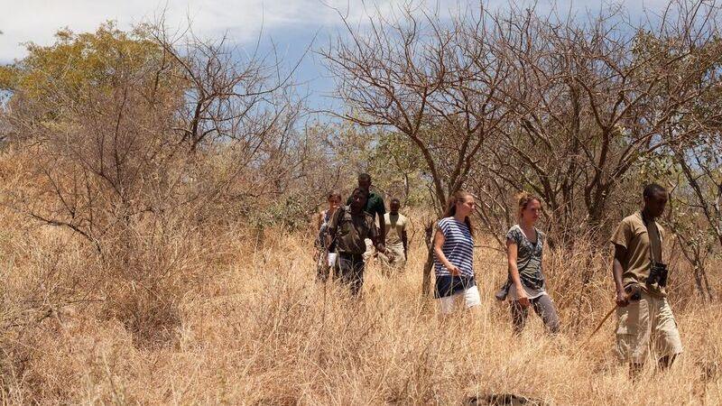 Lake Manyara - safari Tanzania Lake Manyara - boomklimmende leeuwen