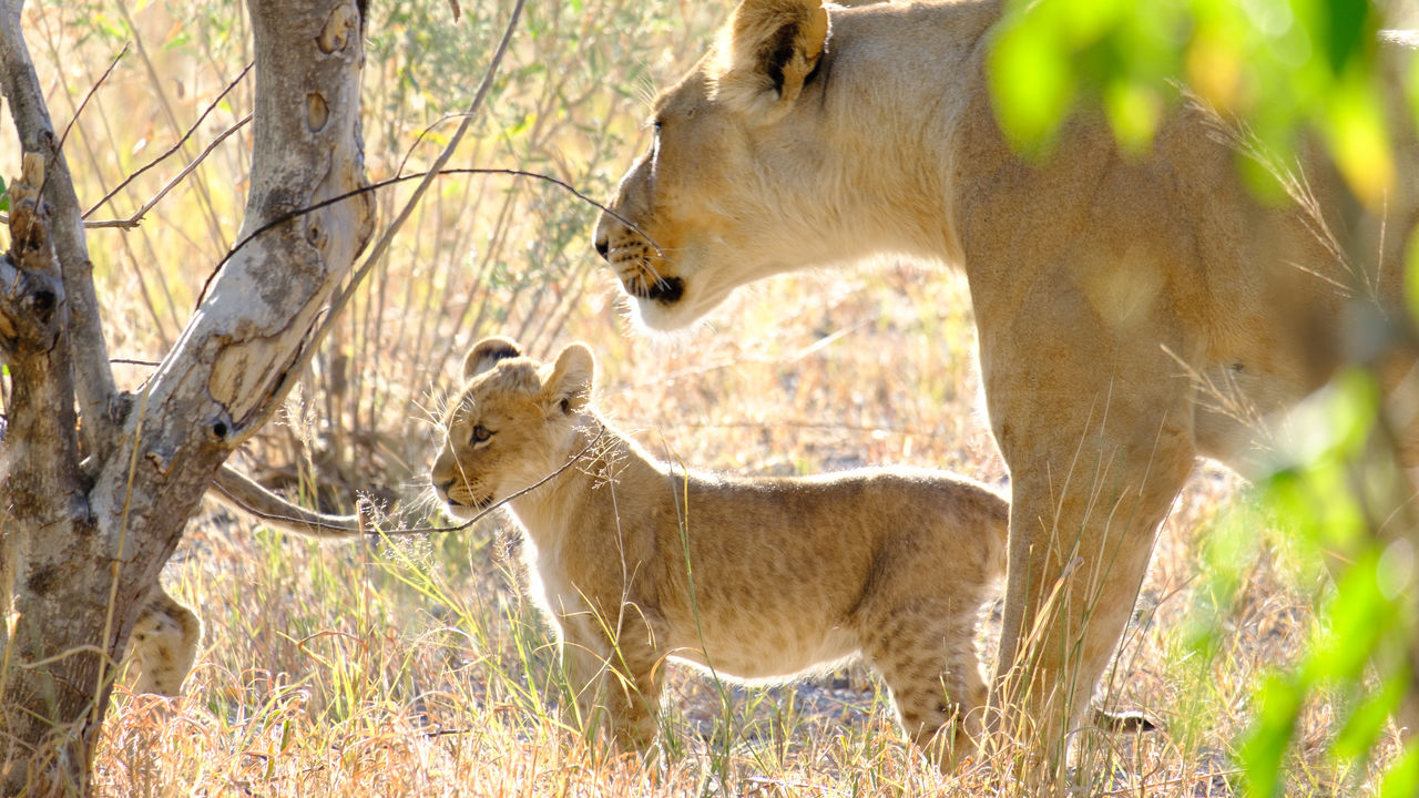 Vakantie Botswana - uit liefde voor Botswana | Matoke Tours