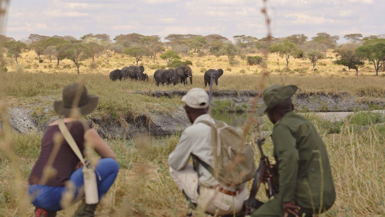 Tarangire National Park - Tarangire safari Tanzania