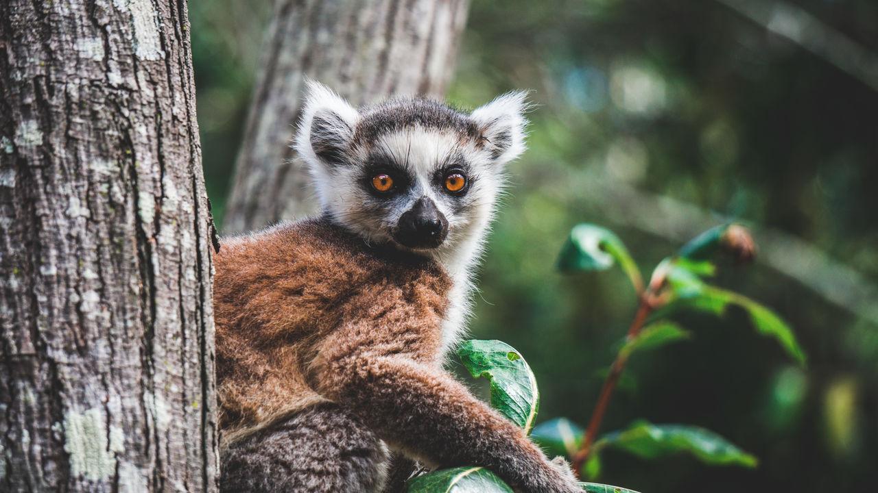 Madagascar & Mauritius | rondreis met Matoke Tours
