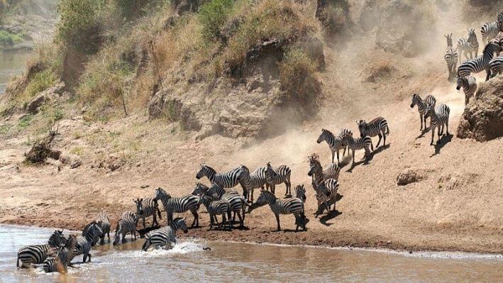 Privéreis Kenia vliegsafari en strand – 9 dagen | Matoke Tours