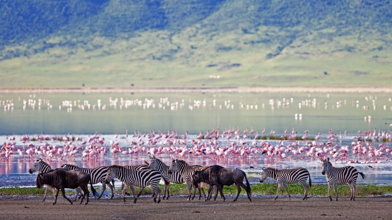 Ngorongoro krater - Ngorongoro Conservation Area - Ngorongoro crater - safari