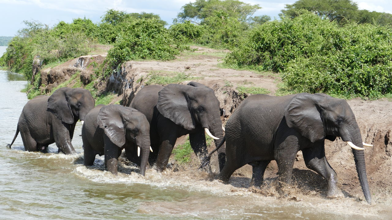 prive reis Oeganda – hoogtepunten Oeganda - 16 dagen