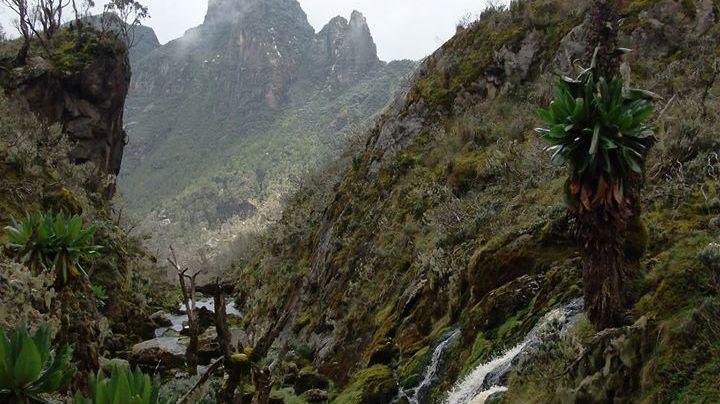 Rwenzori gebergte – Rwenzori mountains - Matoke Tours