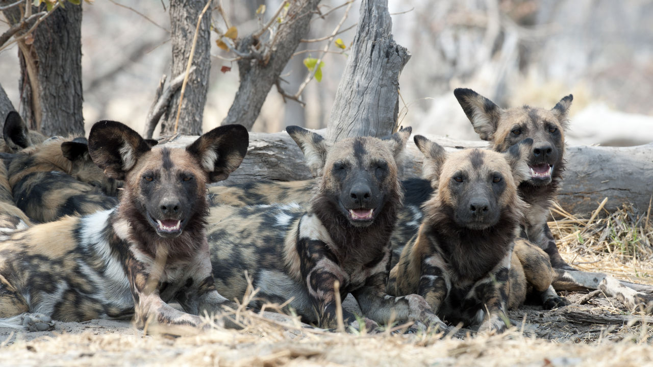 Selous - Selous National Park - Zuid Tanzania Safari