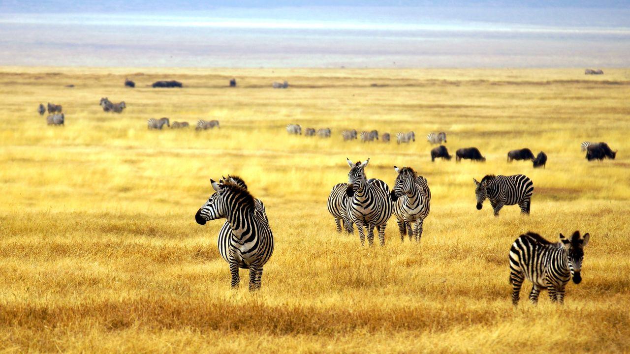 zebra's serengeti