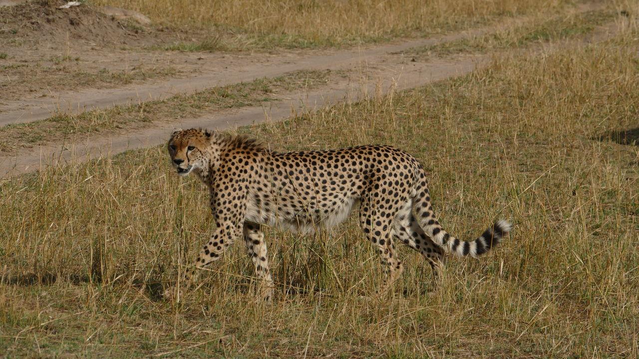Serengeti Safari - Bezoek Serengeti National Park | Matoke Tours