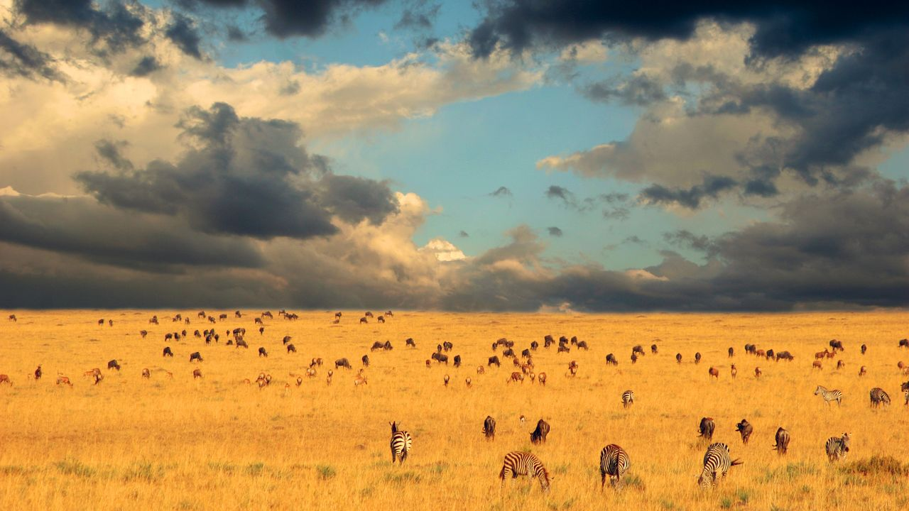 serengeti view