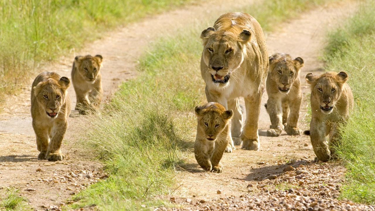 Migratie seizoen Serengeti | migratie seizoenen Tanzania | wanneer wildebeest migratie