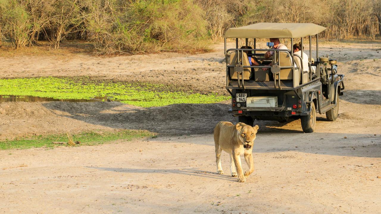 Budget safari Zambia Malawi - budget reis Malawi Zambia