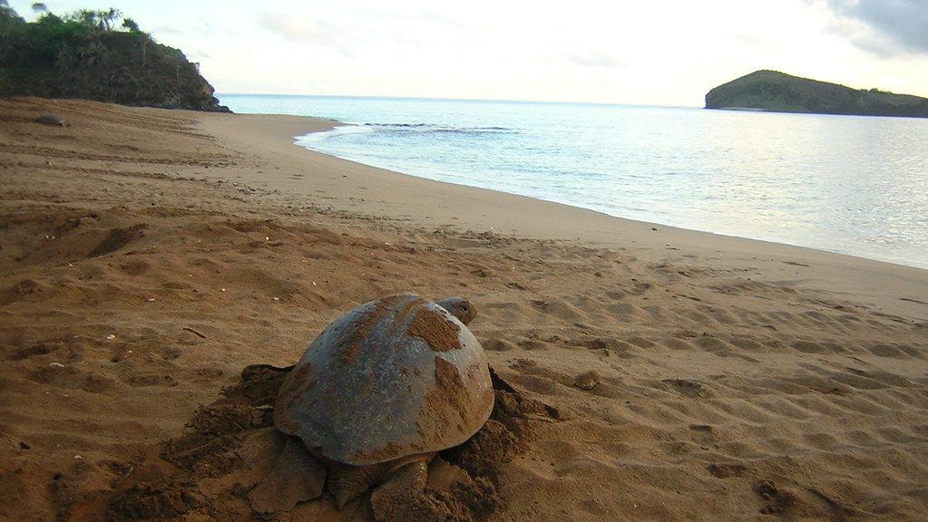 zeeschildpadden bij moheli