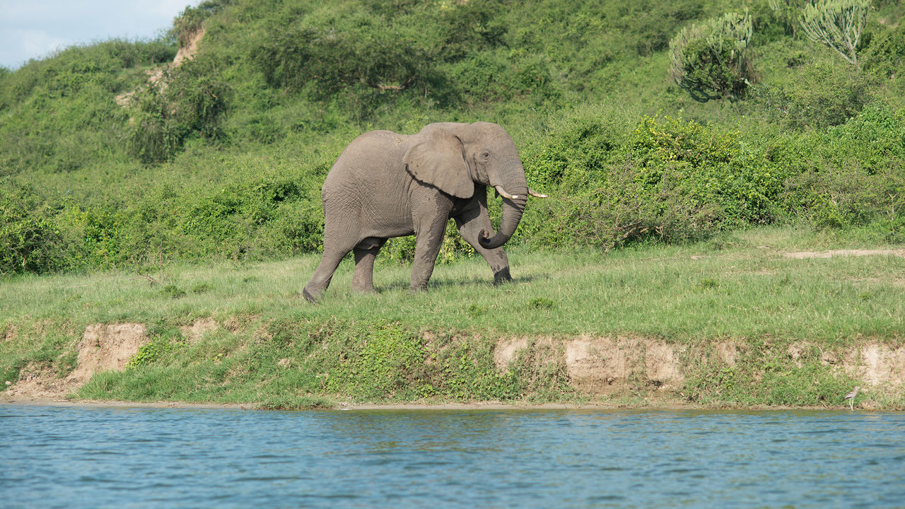 Uganda – Queen Elizabeth National Park