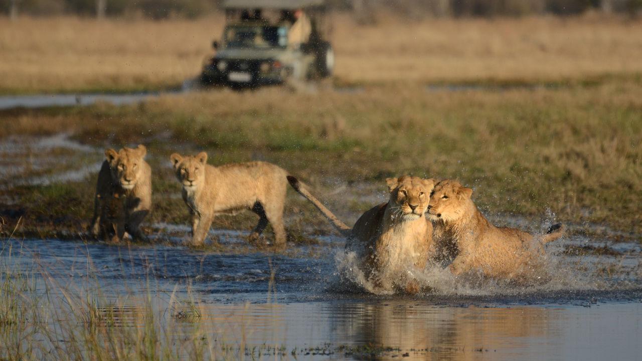 Groepsreis Botswana | groepsreizen naar Botswana | Matoke Tours