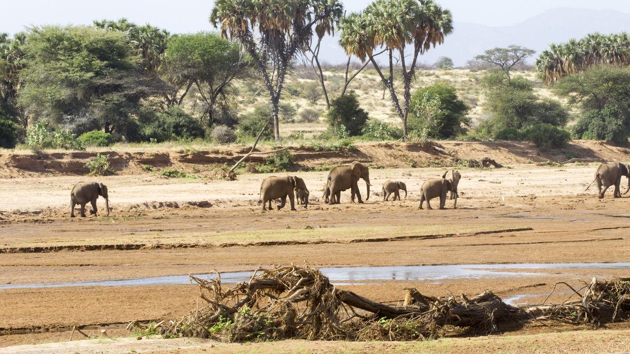 Samburu National Reserve bezoeken | Matoke Tours