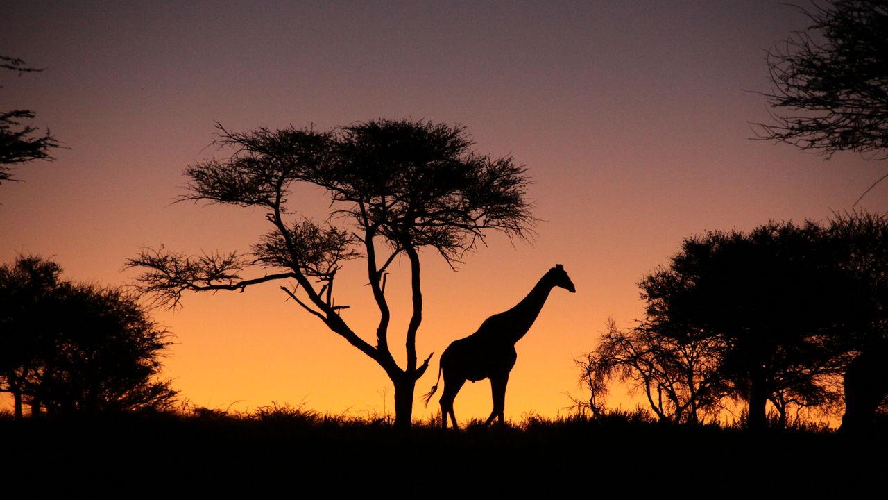 OKONJIMA EN WATERBERG PLATEAU PARK - AfriCat stichting Namibie