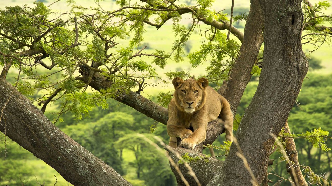 Privéreis Oeganda vliegen gorilla safari - 10 dagen | Matoke Tours