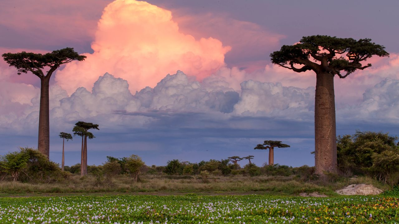 Madagascar reis - De Baobab Laan