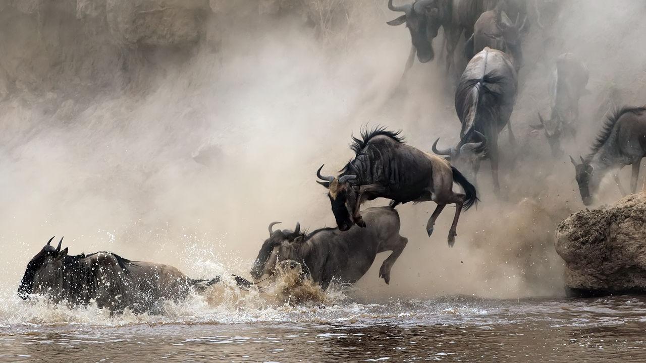 Groepsreis Kenia Tanzania - 18 dagen | Matoke Tours